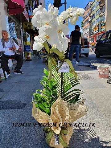 Orkide 15