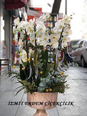 Orkide 9