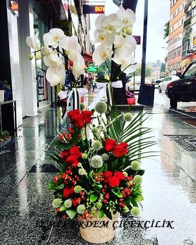 Orkide 14