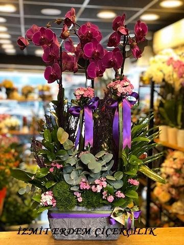 Orkide 6