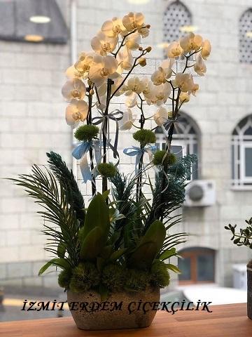 Orkide 8