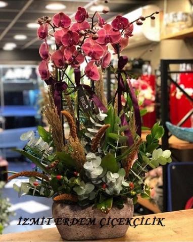 Orkide 4