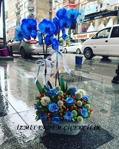 Orkide 13